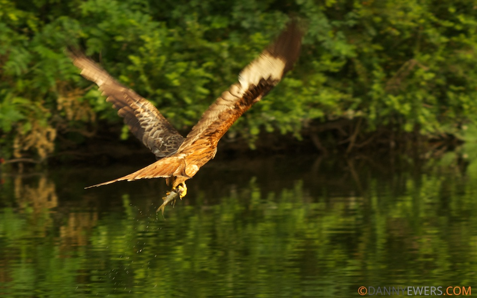 Red Kite Fishing